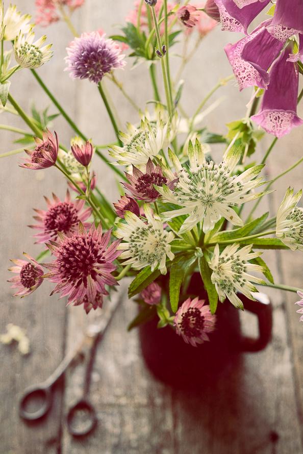 Elderflower 6582 edit