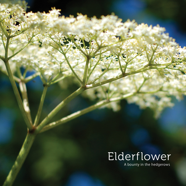 p43-Elderflower-p1